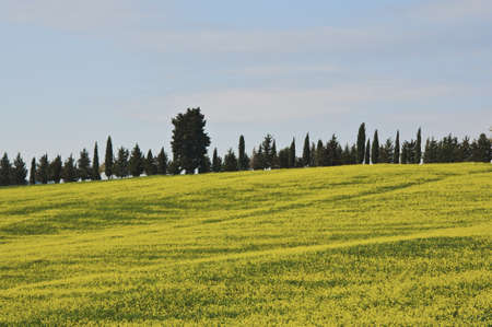 countryside in Chianti, Tuscany, Italy photo