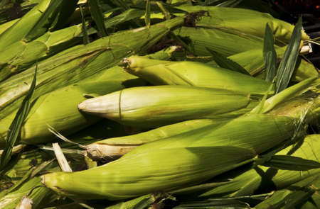 bunch of corns at a farmers market photo