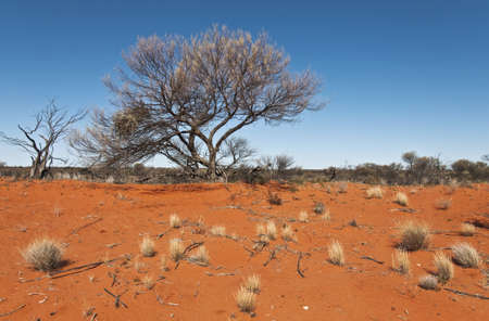 wild landscape in the australian outback, south australia