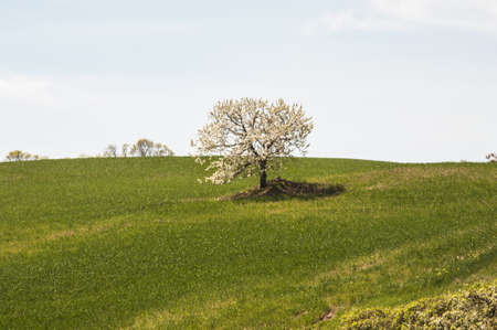 countryside landscape: landscape and countryside in Chianti, Tuscany, Italy