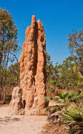 termite mounds in northern territory, australia photo