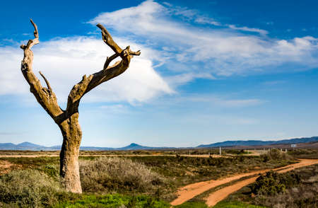 australian outback: wild landscape in the australian outback, south australia