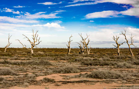 australian outback: isolated trees in the australian outback Stock Photo