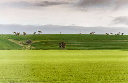australian landscape: hill and grass in the australian landscape, south australia