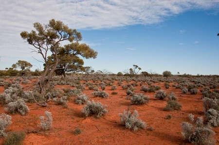 オーストラリアの砂漠の赤い中心、北方領土のアウトバック
