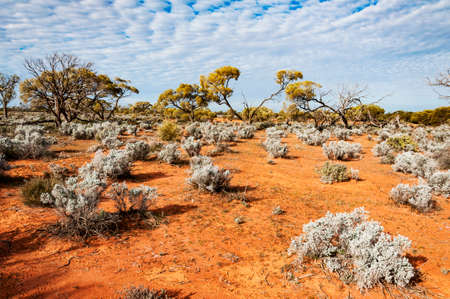 the red center in the australian desert, the outback in Northern Territory Zdjęcie Seryjne - 97569680
