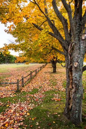 background with autumn colorful leaves in Maine, USA