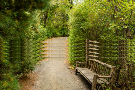 Autumn forest mist bench panorama. Misty forest park bench in autumn green background. Plymouth, MA, USA