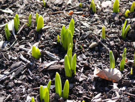 new life from the earth: the arrival of spring