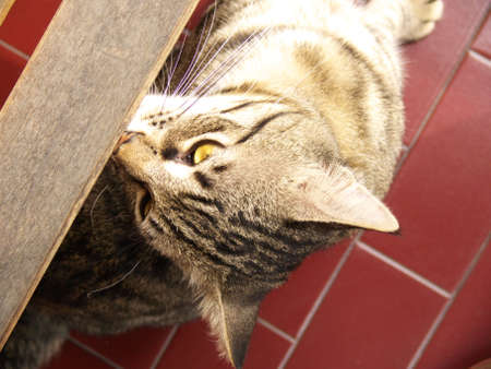 close-up of a cat looking up from under a wooden bench
