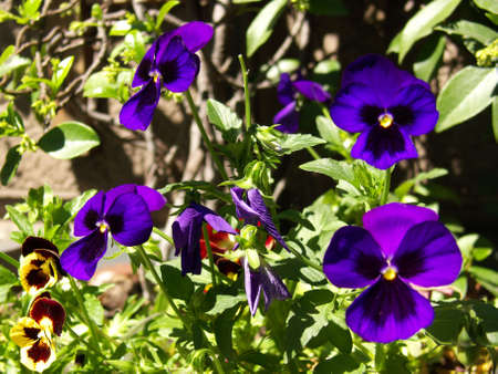purple flowers and leaves in front of a stone wall