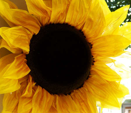 a big paper sunflower hanging from a wall in the street in a sunny day