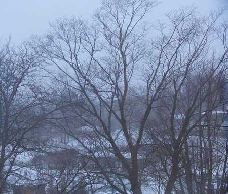 winter landscape just before sunrise, ontario, canada