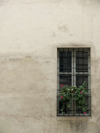 window with flowers on dusty wall