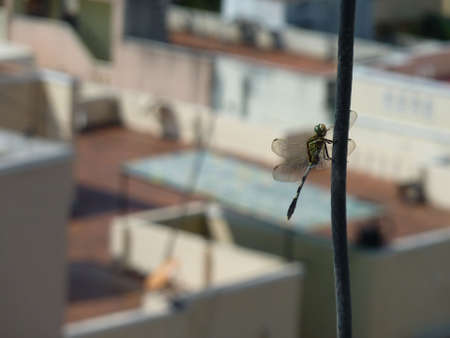 dragonfly on a tropical urban landscape Stock Photo