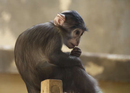 Small monkey sitting on a pole at the zoo Stock Photo