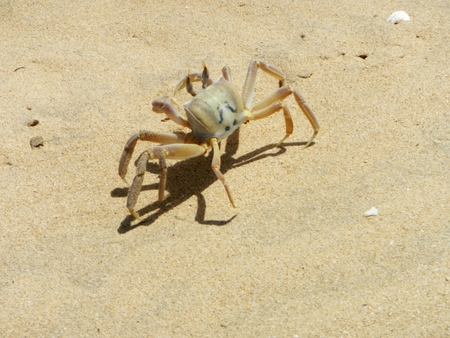 Crab on tropical beach Standard-Bild