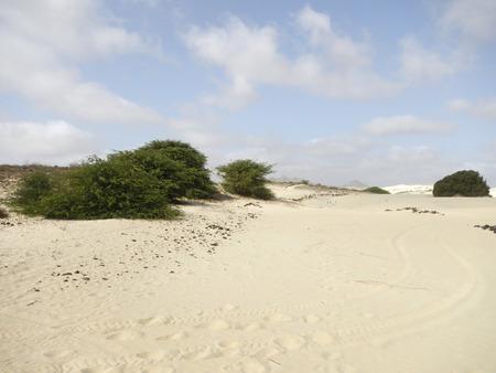 Akazien in Wüstenoase Lizenzfreie Bilder