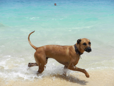Dog swimming on tropical beach Standard-Bild