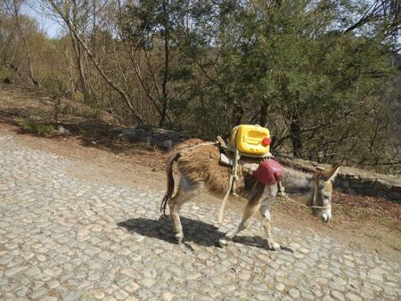 Donkey carrying water tank
