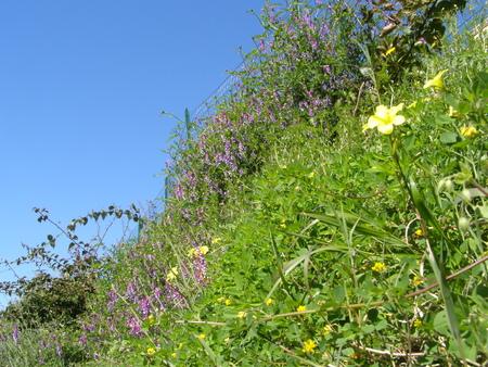 Blühende Wiese in Sizilien