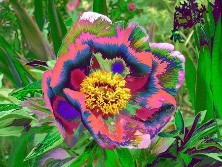 Psychedelic acid flower Standard-Bild
