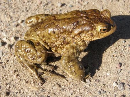 poisonous: Poisonous frog