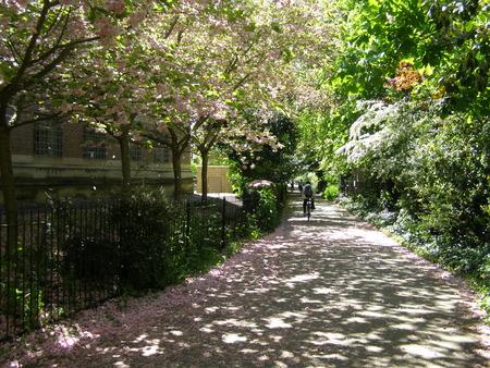 Straße mit rosa Blüten