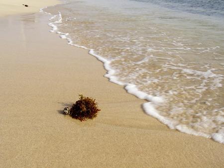 licking: Waves licking tropical beach
