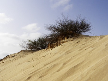 Bush growing on sand dune in desert