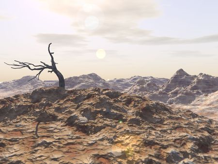 A dead tree forms the center of interest in a desolate rocky landscape.