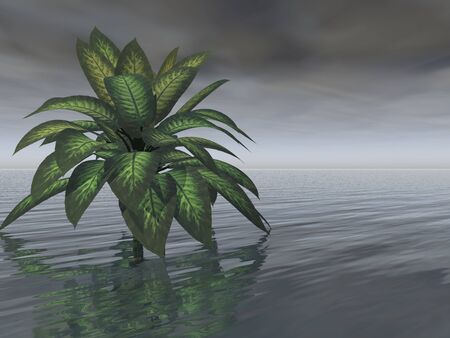 A single healthy-looking tree stands in water beneath a dark, gray, foreboding sky. A storm appears imminent. Stock Photo
