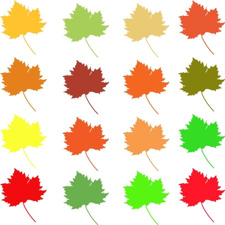 Set of summer and fall maple leaves