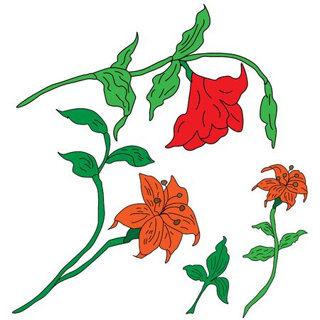buds: Hand drawn lilies,  buds, stalks and leave over the white background Illustration