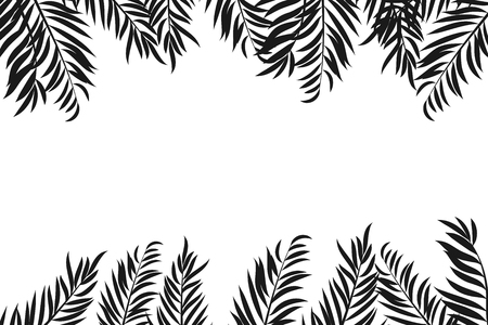 Balck silouhette of palm tree leaves isolated on white background with space for text.