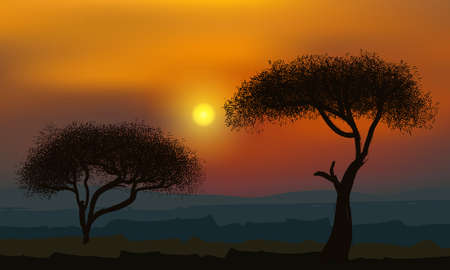 African acacia trees on the background of the golden sunset.