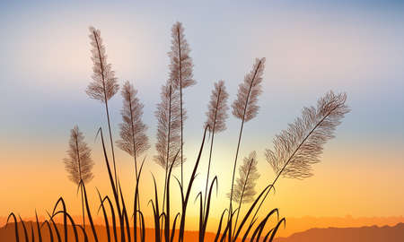 Reeds on the background of a golden sunset distant rock.