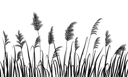 Silhouette of reeds and marsh grass on white background.