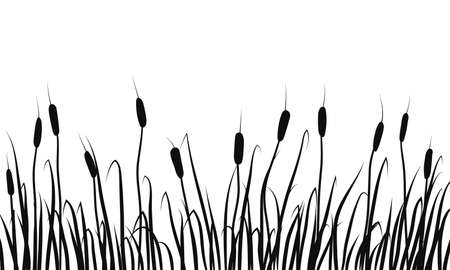 Silhouette of reeds, rushes and marsh grass on white background.