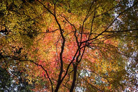 Autumn colors Stock Photo - 24536500