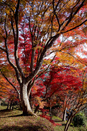 Autumn tree Stock Photo - 24520759