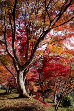 Autumn tree Stock Photo - 24520759