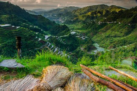 Rice Field in the Philippines Stock Photo