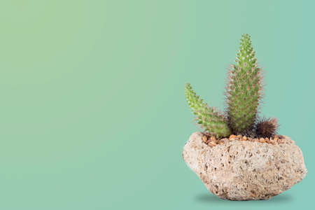 Indoor cacti in a volcanic stone pot with a pastel green background with room for text to the side.