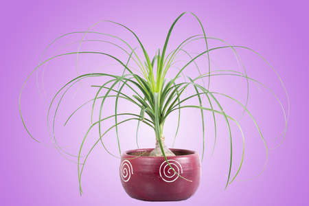 Indoor potted plant with an attractive and colorful design