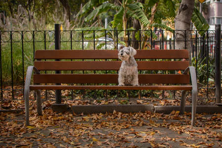Dog sitting in the park on a bench, on an autumn day with the leaves of the trees dry and lying on the floor