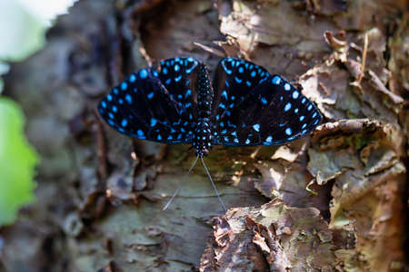 Beautiful macro picture of a black andblue butterfly sitting on a tree. Foto de archivo