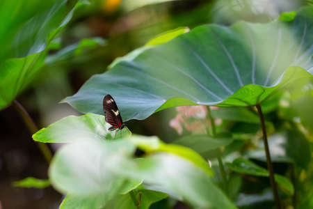 Beautiful macro picture of a black, red and white butterfly sitting on a leaf.