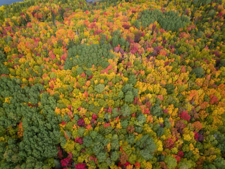 Aerial view from above on the colorful trees during fall season. Taken near Belledune, New Brunswick, Canada.