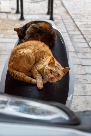 Street cats relaxing on scooter seat in the Old City of Akko. Taken in Acre, Israel.